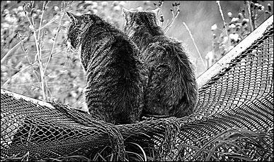 Котенок сексуально озабочен и пристает к членам семьи